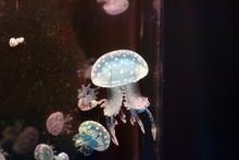 Jellyfish Swimming In The Dark...