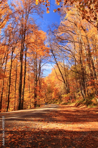 Poster Oranje eclat Great Smoky Mountains National Park