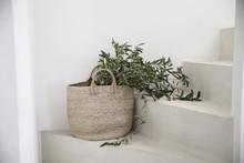 Les Branches D'olivier Dans Le...