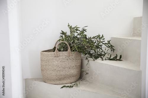 Les branches d'olivier dans le panier.