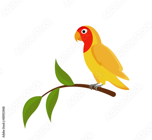 Yellow Lovebird on a branch