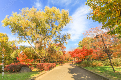 Foto op Canvas Herfst Japan autumn , Beautiful autumn leaves of Obuse park ,Nagano Prefecture,Japan.