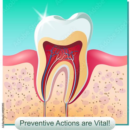 Dental anatomy Wallpaper Mural