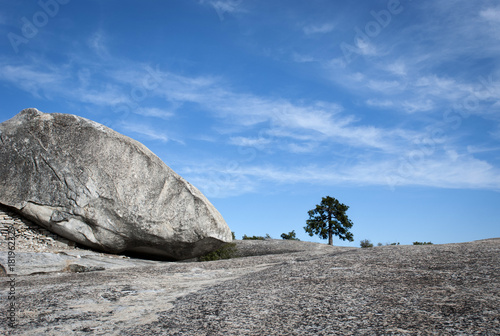 Solitary tree in mountain of rock Plakat