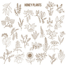 Plants - Nectar Sources For Honey Bees