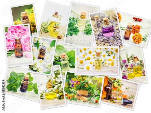 Photo  medicinal herbs collage. Selective focus.