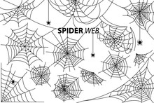 Spider Web Collection Of Illus...