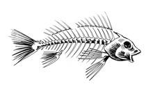 Fish Skeleton. Ink Black And W...