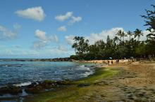 Fabulous Green Sand Beach Full Of Turtles. Oahu, Hawaii, USA, EEUU.