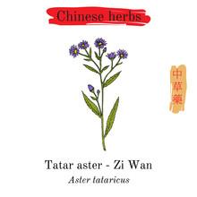Medicinal Herbs Of China. Tata...