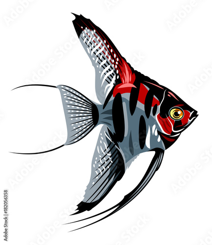 Photo Image of decorative fish Skalaria