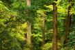 晩秋の森の木々