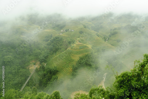 Staande foto Olijf scenery with rice fields in terraces under the rain and the fog in the Sapa vale in Vietnam.