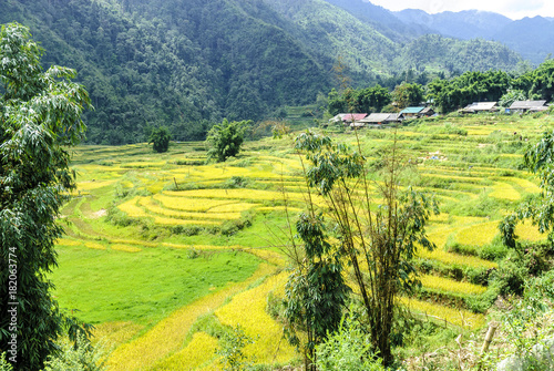 In de dag Lime groen sight of the fields of rice cultivated in terraces in the Sapa valey in Vietnam.