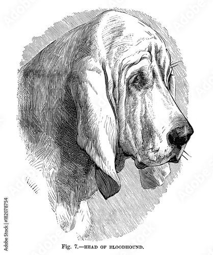 Illustration of purebred dogs. Canvas Print