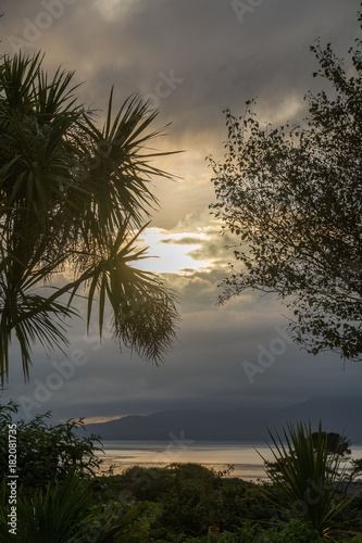 Palm trees silhouetted on Bantry Bay, Wild Atlantic Way, Ireland. Wallpaper Mural