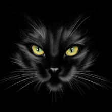 Hand-drawing Portrait Of A Black Cat