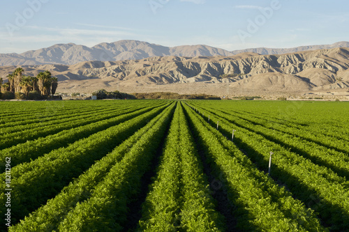 Canvas Prints Arizona Carrot Farm in the Desert
