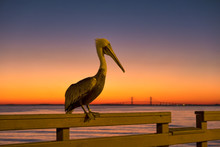 Pelican At Sunset On A Pier