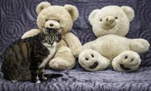 Kot I Pluszowe Miśie