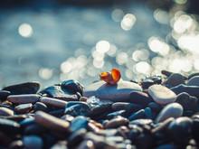 Small Seashell Lies On Pebble On Sea Background With Bokeh
