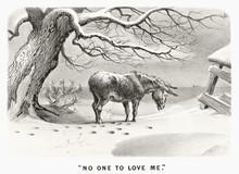 Sad Lonely Donkey Under A Bare...