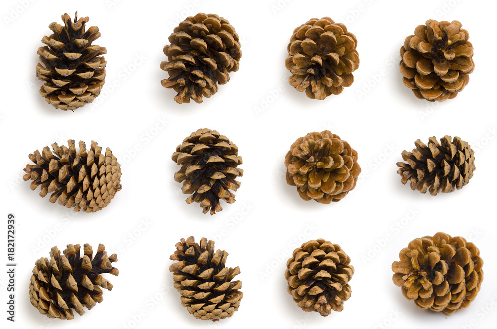 Fototapety, obrazy: Pine cones set isolated on white