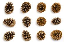 Pine Cones Set Isolated On White