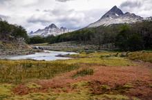 Peat Bog In Tierra Del Fuego P...