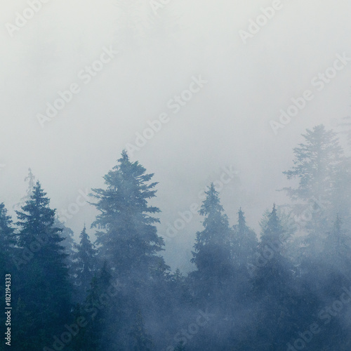 Foto op Canvas Bos Foggy morning summer landscape with fir trees, seasonal travel hipster background