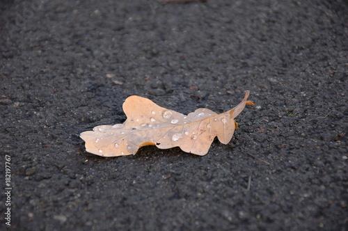 Staande foto Paardebloemen en water Yellow oak leaf in autumn on the asphalt.