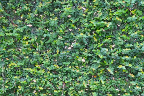 zielony-lisc-sciany-tlo