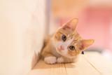 Fototapeta Zwierzęta - cat