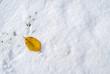 落ち葉 雪 素材