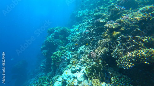 Poster Onder water beautiful coral reef