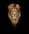Leinwandbild Motiv Portrait of a Beautiful lion, lion in dark. Portrait of a leader. king