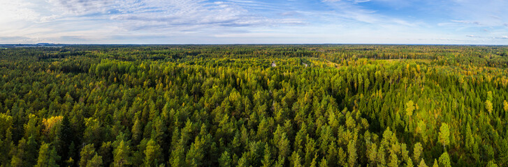 Aerial view of autumn trees. Colorful trees from above. Panorama.
