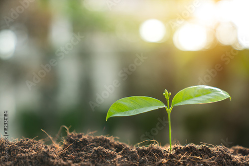 Poster Printemps Young Plant Growing In Sunlight