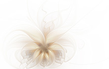 Abstract Beautiful Fractal Flo...