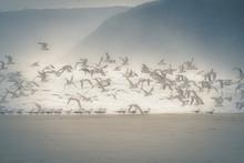 Seagulls Misty Ocean