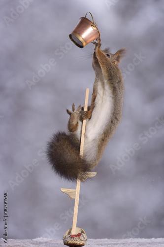 Fotografia, Obraz  squirrel holding on to bucket on stilts
