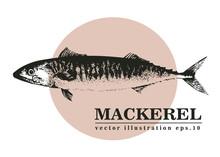 Hand Drawn Sketch Seafood Vector Vintage Illustration Of Mackerel Fish. Can Be Use For Menu Or Packaging Design. Engraved Style. Vintage Illustration.