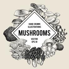 Vector Mushroom Illustrations. Hand Drawn Set Of Different Fungus Kinds. Vector Banner Or Logo Template. Vintage Illustration.