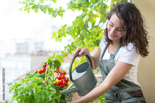 Fotografie, Obraz Young woman watering tomatoes on her city balcony garden - Nature and ecology th