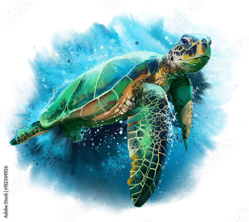 Fototapeta  Big sea turtle watercolor painting