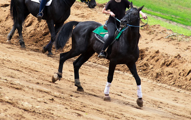 Race horse in run. A black horse with a rider runs along the track.