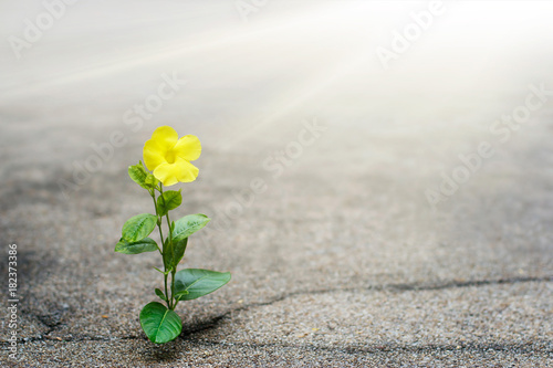 Photo  Yellow flower growing on crack street, hope concept
