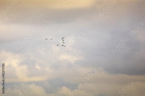 Cuadros en Lienzo Kraniche und Wolken am Himmel, Nationalpark Vorpommersche Boddenlandschaft, Fisc