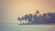 Palm trees in sunset, tropical island background