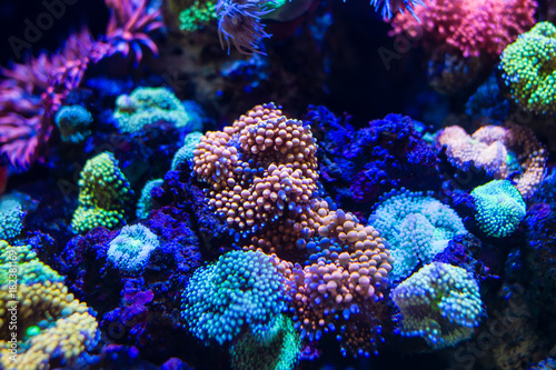 Staande foto Koraalriffen Colorful Ricordea florida Mushroom Coral